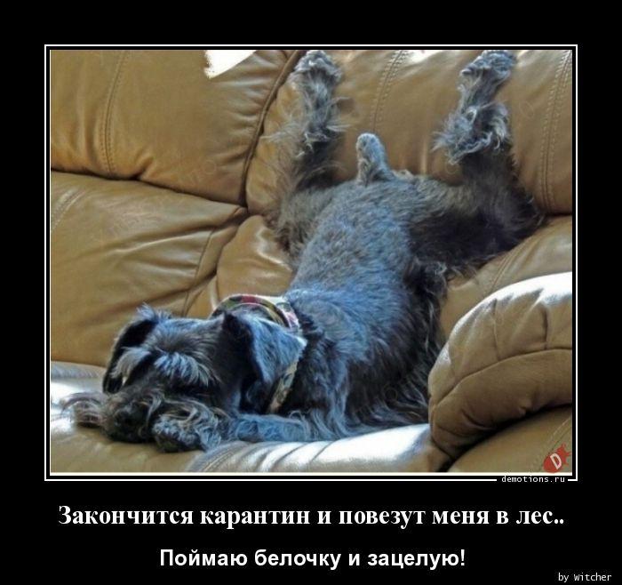 1593583925_Zakonchitsya-karanti.jpg