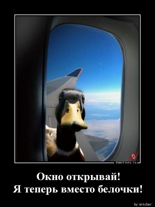 1593447519_Okno-otkryvay-Ya-tep.jpg
