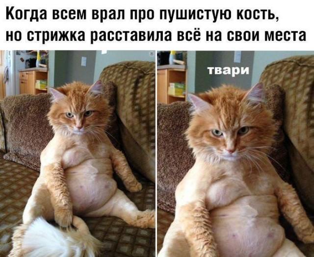 1595362015_podborka-53.jpg