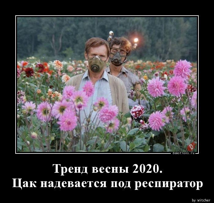 1584410157_Trend-vesny-2020.-Ca.jpg