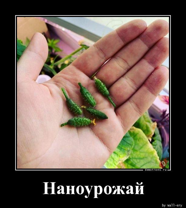 1595047287_Nanourozhay.jpg