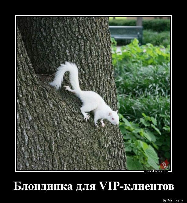 1594919180_Blondinka-dlya-VIP-k.jpg
