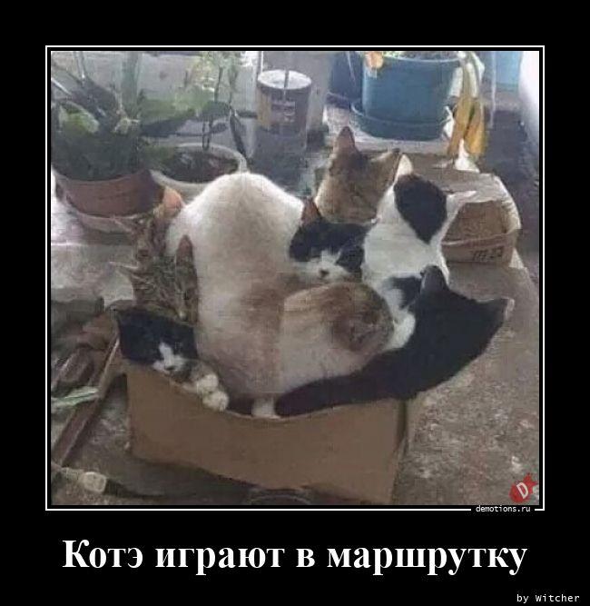 1595511167_Kote-igrayut-v-marsh.jpg