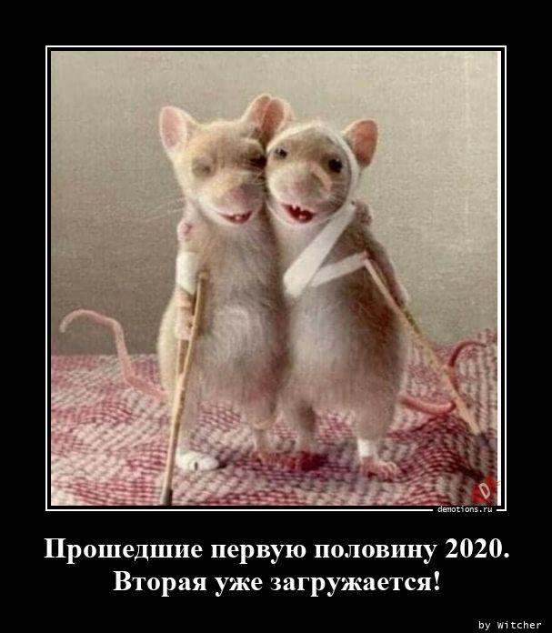 1595497126_Proshedshie-pervuyu-.jpg