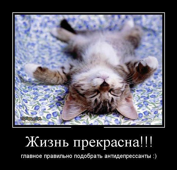 1356532366_svezhie-demki.jpg