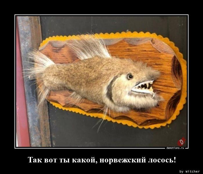 1596184891_Tak-vot-ty-kakoy-nor.jpg
