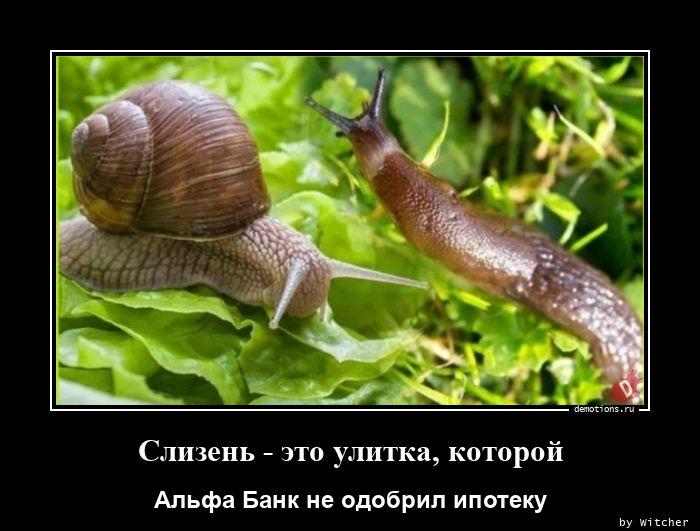 1596612630_Slizen-eto-ulitka-ko.jpg