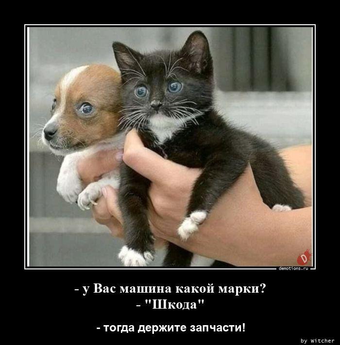 1596554682_-u-Vas-mashina-kakoy.jpg
