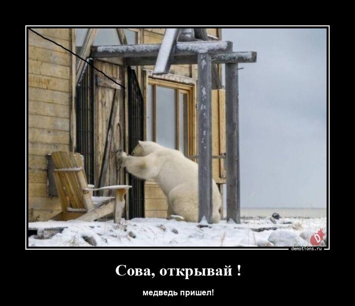 1596533125_Sova-otkryvay-.jpg