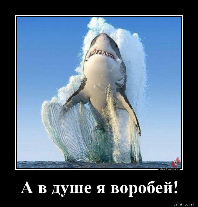 1597754449_A-v-dushe-ya-vorobey.jpg