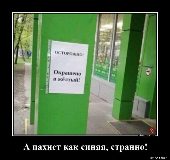 1598618009_A-pahnet-kak-sinyaya.jpg
