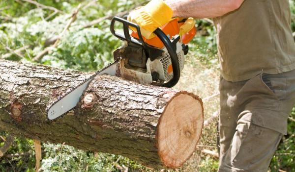 Вырубка деревьев в Москве.jpg