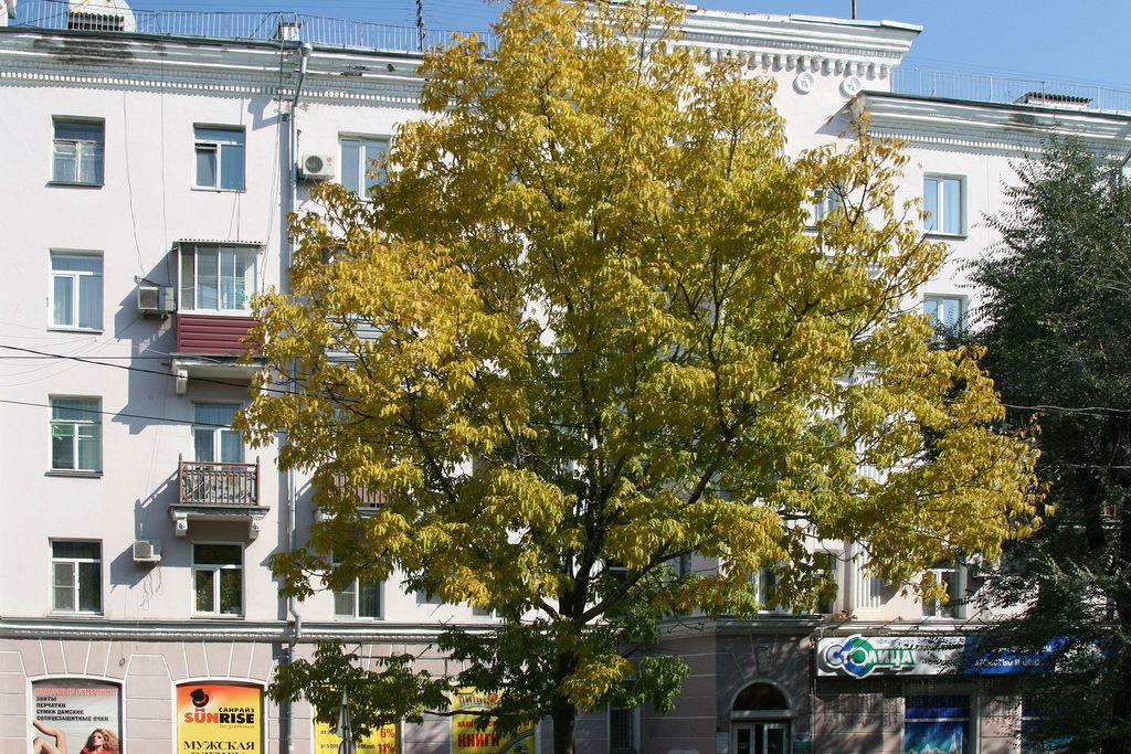 komsomolsk_amur_230914_ed_11_std.jpg