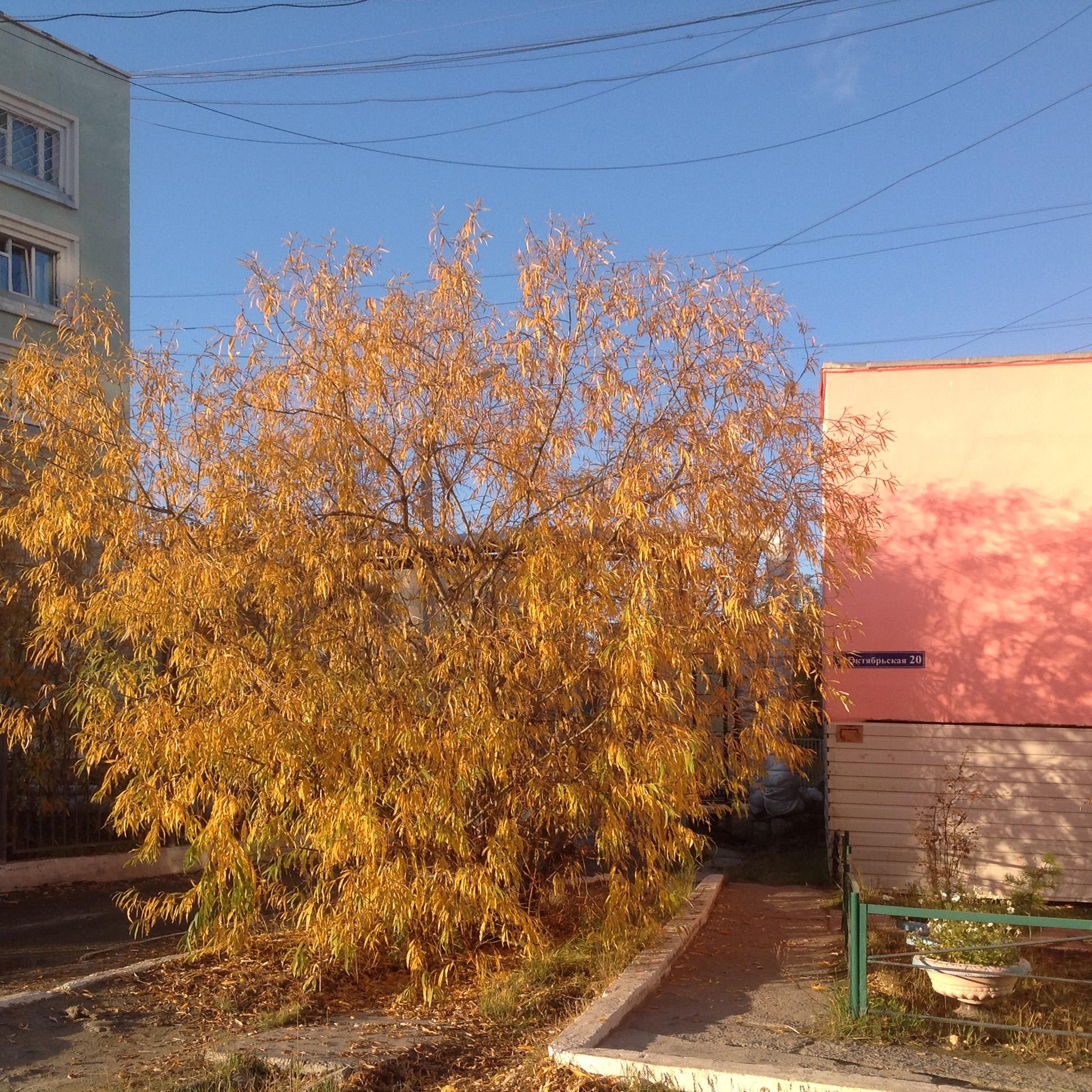 Yakutsk_220917_23.JPG
