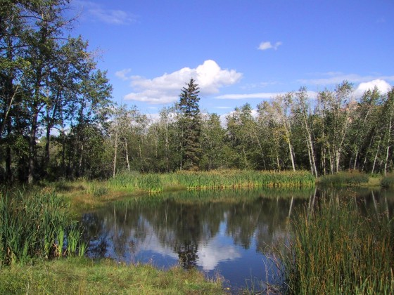pond in Fish Creek Park