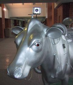 future cow