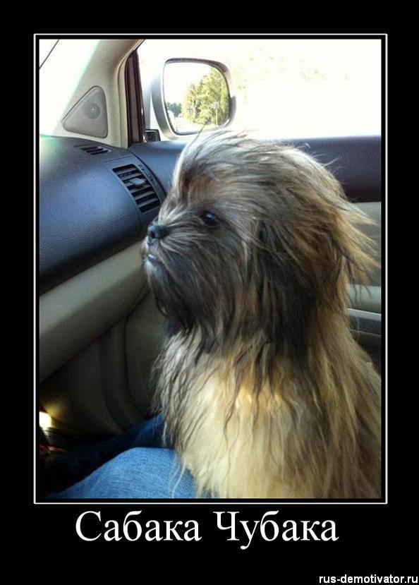 dog that looks like chewbacca - 553×710