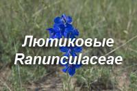 Лютиковые – Ranunculaceae