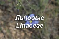 Льновые – Linaceae