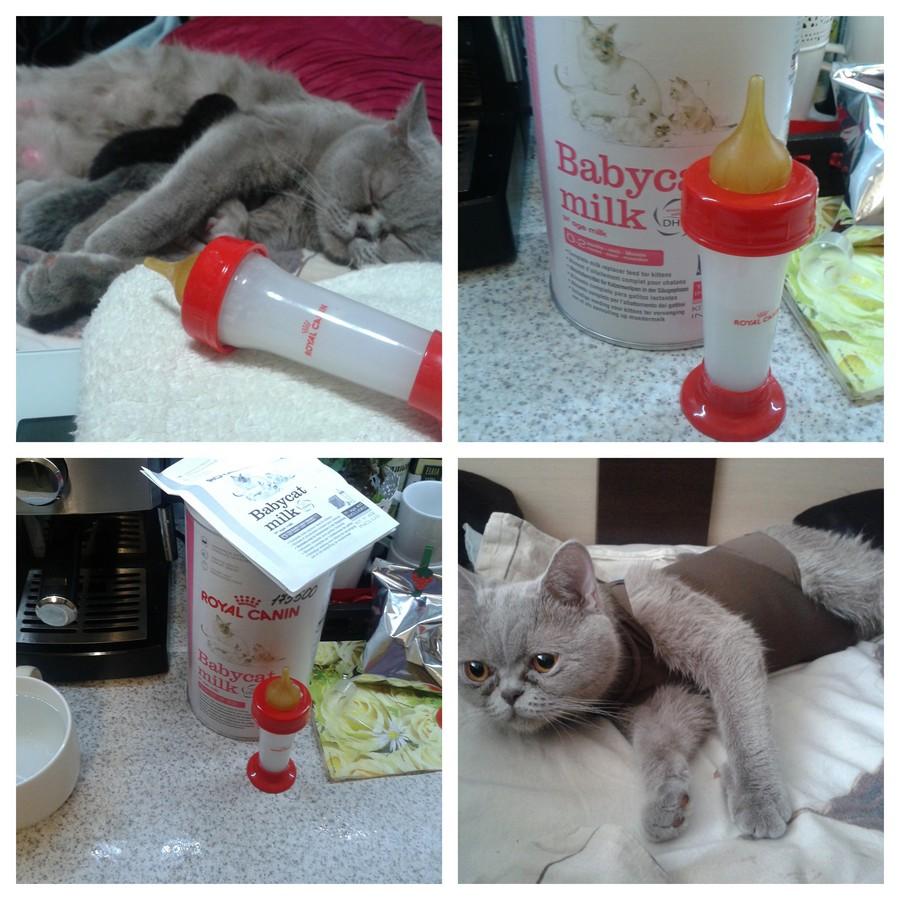 Как и чем сделать клизму котенку