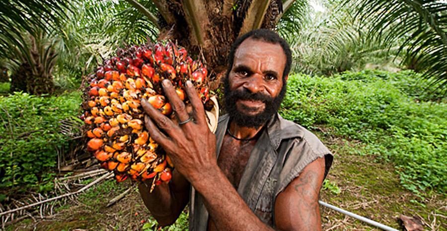 Так вот оно какое, пальмовое масло!