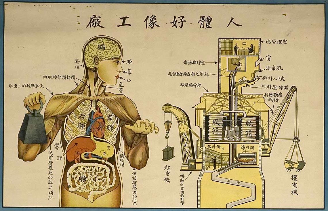 Китайский анатомический плакат (увеличенное изображение – через клик)