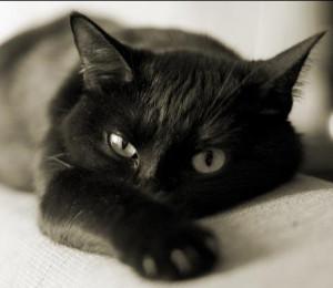 фото коты чёрные