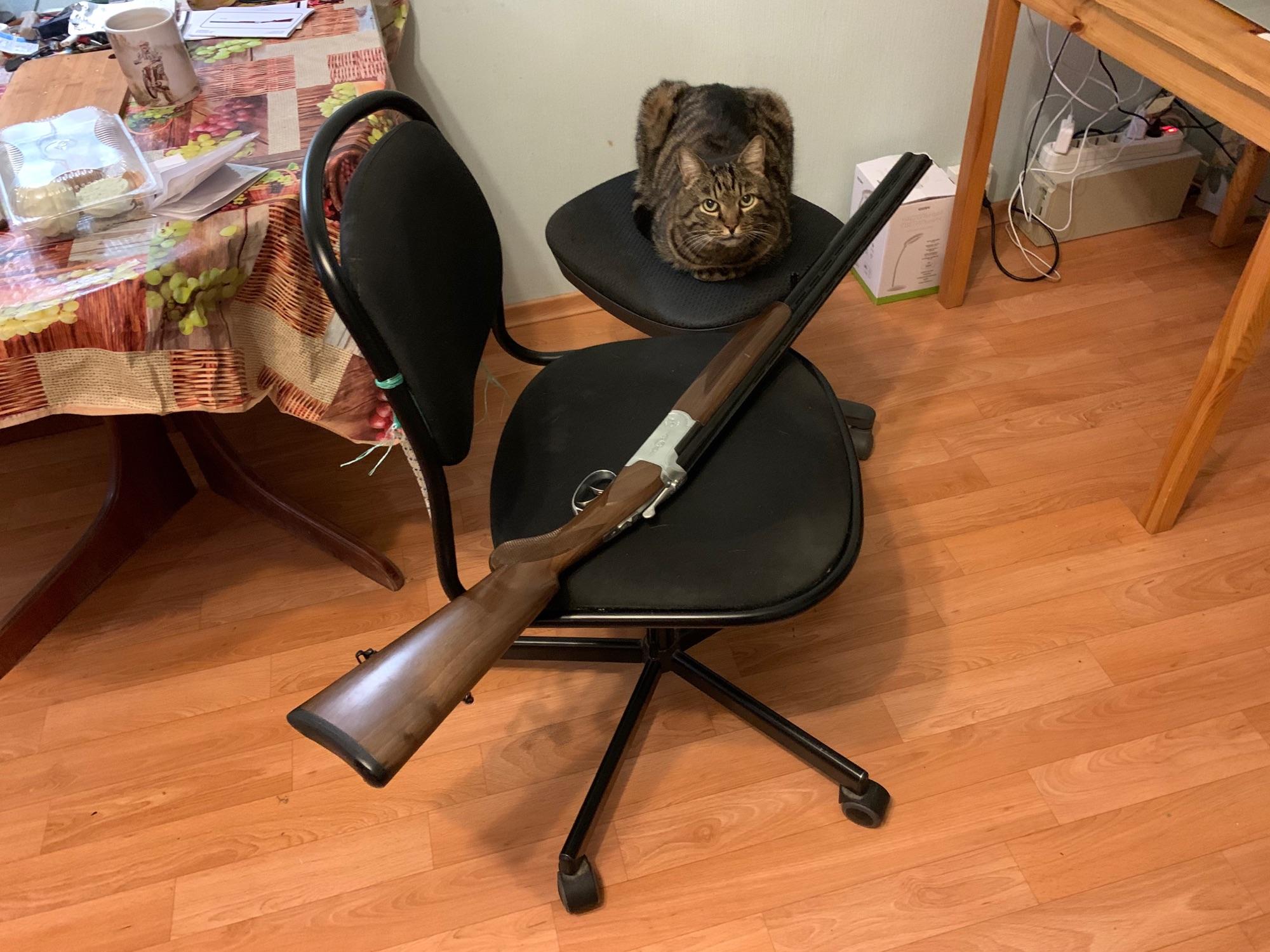 Ружьё и охотничий кот Васито.