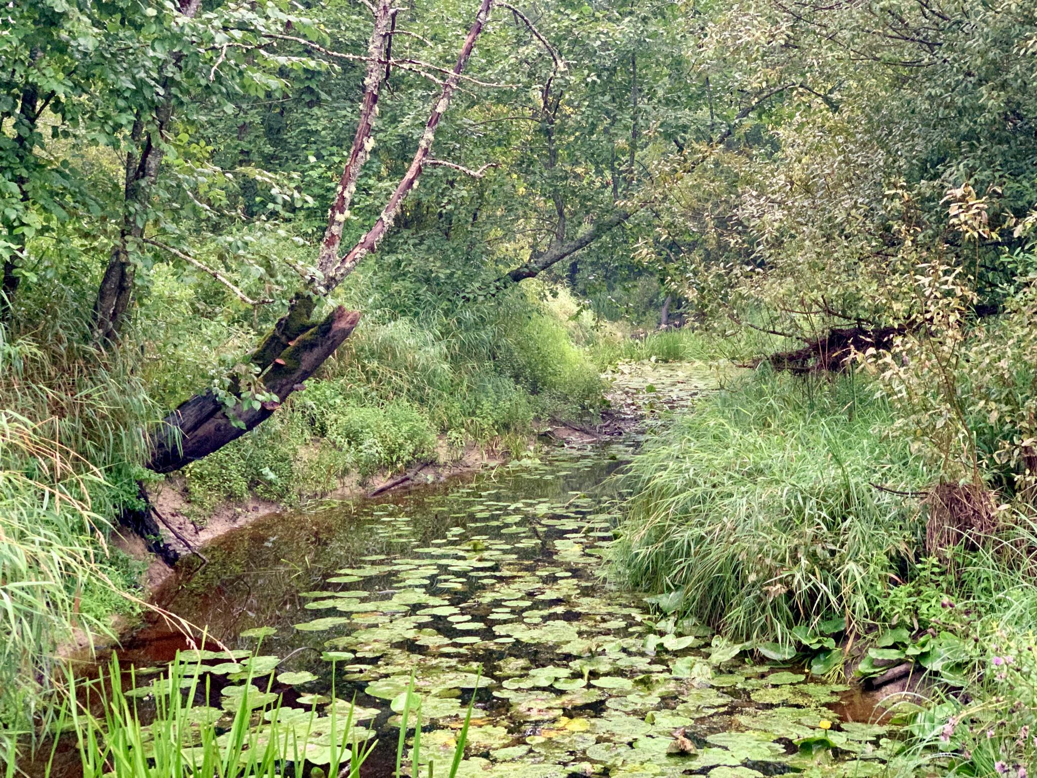 Тихая лесная речка.