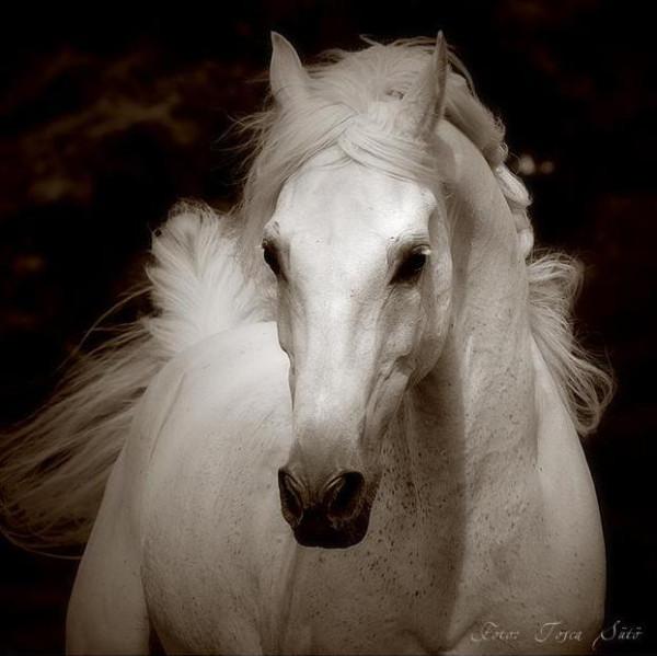 Лошади для души