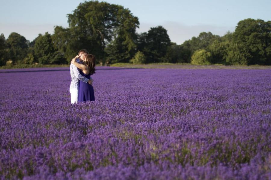 Lavender-fields6