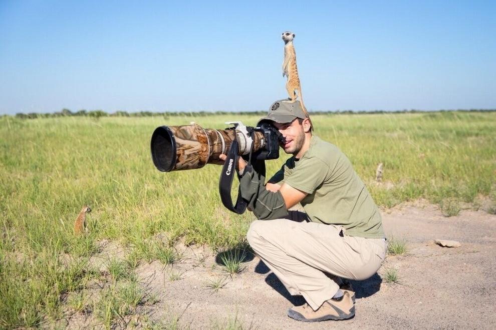 smelie-surikati-1