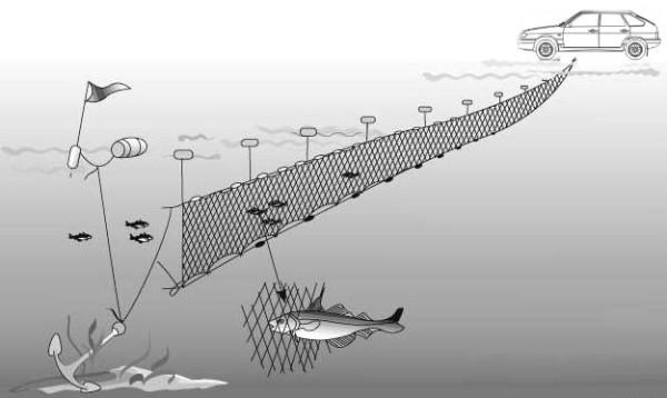 технология ловли рыбы сетью