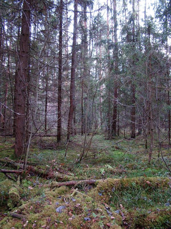 Тихий и грустный осенний лес