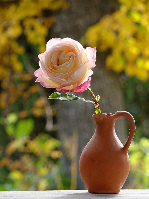 Последняя роза