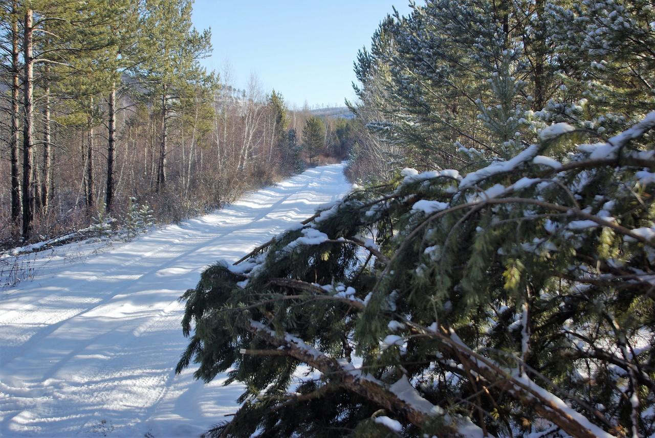 Лесовозные дороги