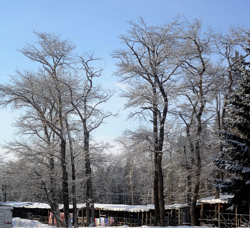 Аршан в феврале
