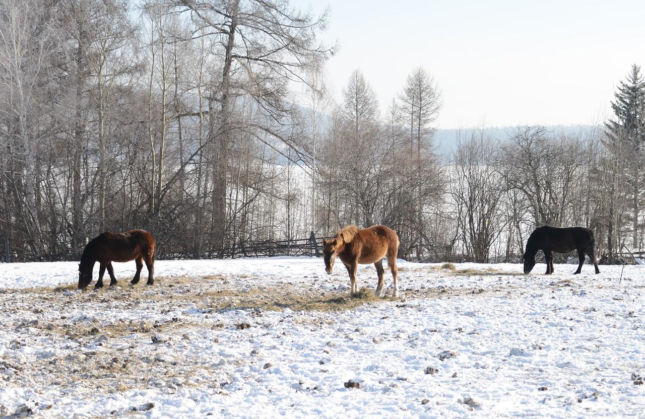 Зимой в Дубынино