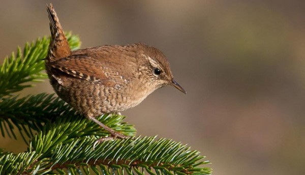 opisanie-pticy-2.jpg