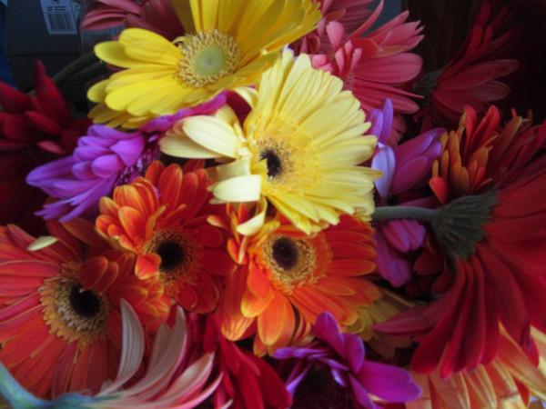 цветы9