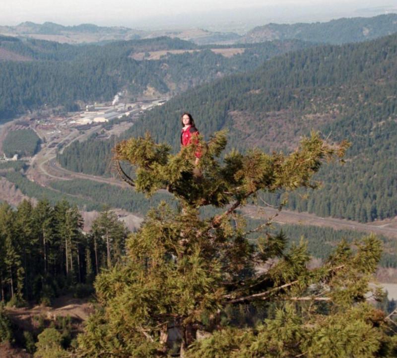 Джулия Баттерфляй Хилл, американская экологическая активистка, прожила на гигантском 1500-летнем красном дереве по имени Луна 738 дней в знак протеста против лесозаготовительных акций Тихоокеанской лесопромышленной компании.