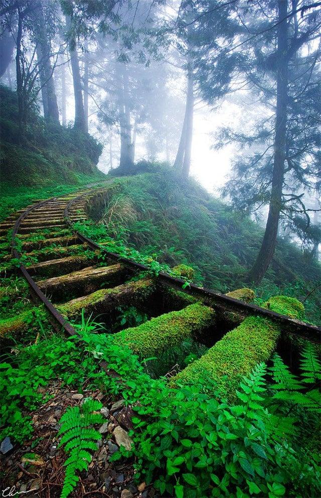 Железнодорожные пути в лесу (Тайвань)