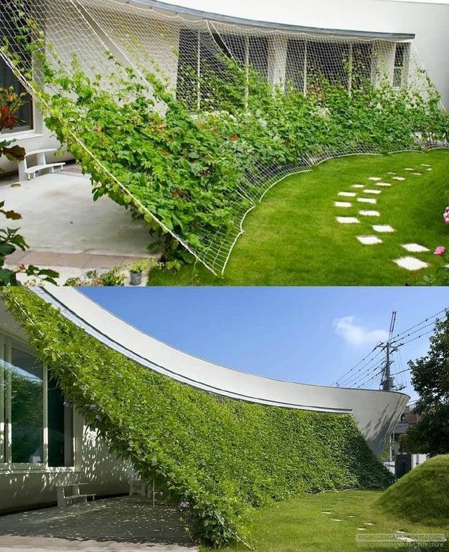 Дизайн дома с зеленым экраном от архитекторского бюро Хидео Кумаки