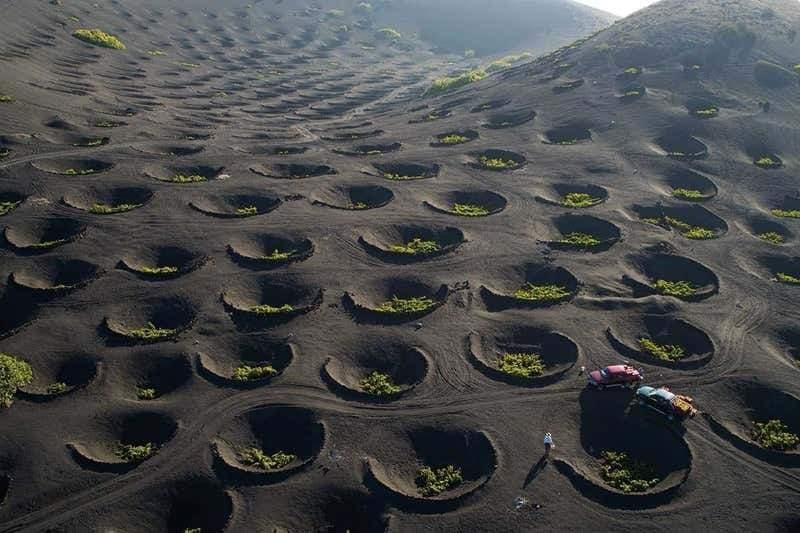 Именно так растут виноградники на Канарских островах. Поскольку на острове много вулканов, почва очень богата питательными веществами. Саженцы винограда высаживают специально в вырытые ямы шириной до нескольких метров. Это делается для того, чтобы корням было легче добраться до плодородного слоя почвы и удержать влагу.