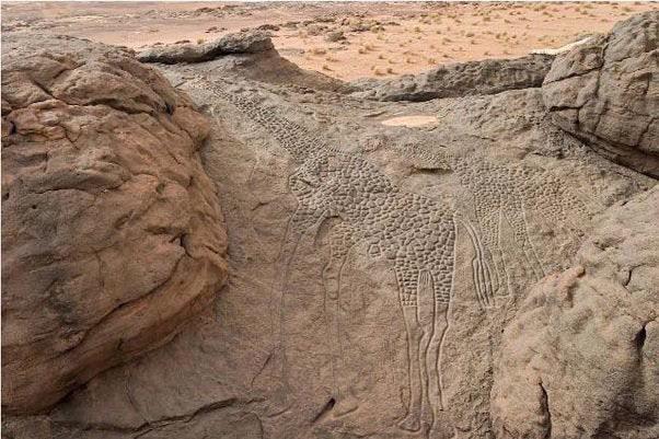 10 000-летние гравюры жирафа в пустыне Сахара