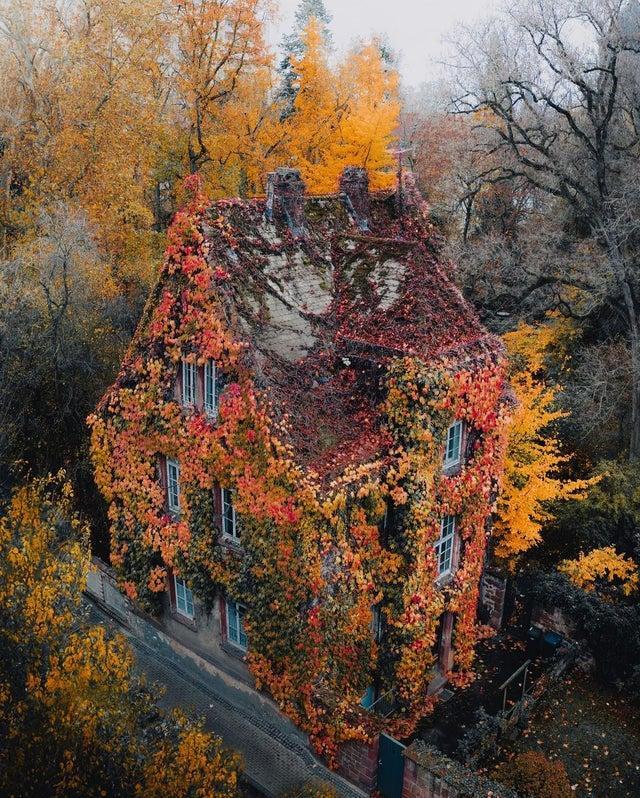 Дом, покрытый разросшимся плющом, находится в Ботаническом саду Гиссен, старейшем  саду Германии