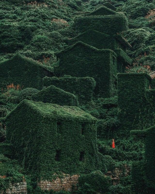 Небольшая деревня, лежащая на одном из 400 островов Шенгси, расположенных к востоку от китайской провинции Чжэцзян, уже десятки лет заброшена людьми, но с каждым годом все больше привлекает внимание туристов. После того, как известный своим рыболовным промыслом городок покинули люди, нашедшие более удобные пути заработка на материке, он начал исчезать под натиском местной растительности, превращаясь в царство зелени.