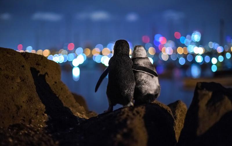 Премия Community Choice Award фотограф Тобиас Баумгертнер