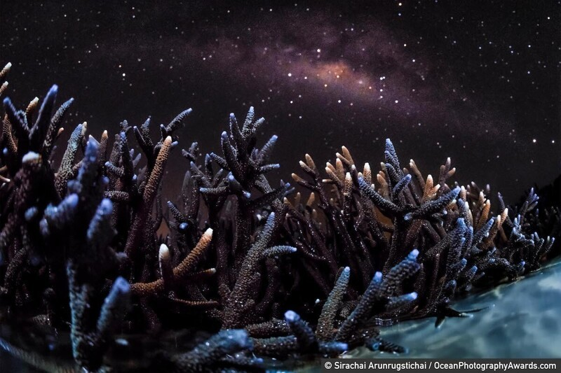Стагхорнские кораллы, Таиланд, Sirachai Arunrugstichai