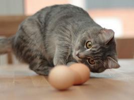 яйца в профиль
